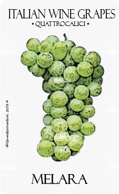 melara vitigno