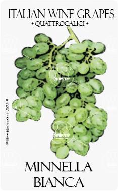 minnella bianca vitigno