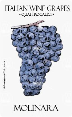 molinara vitigno
