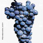 montepulciano vitigno