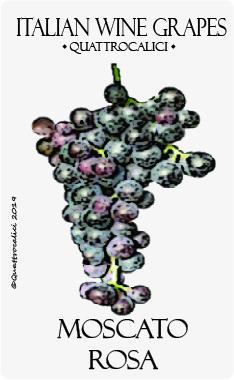 moscato rosa vitigno