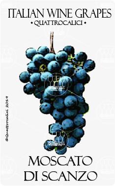 moscato di scanzo vitigno