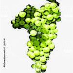 moscato di terracina vitigno