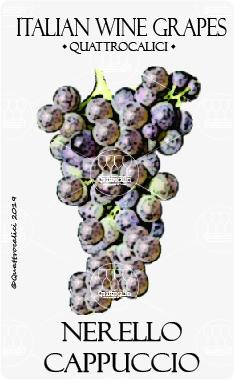 nerello cappuccio vitigno
