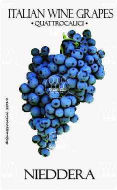 nieddera vitigno