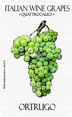 ortrugo vitigno