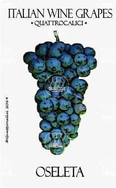 oseleta vitigno