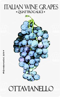 ottavianello vitigno