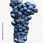 pallagrello nero vitigno