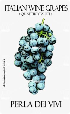 perla dei vivi vitigno