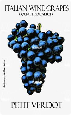 petit verdot vitigno