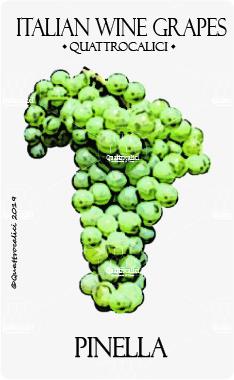 pinella vitigno