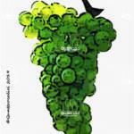 pinot bianco vitigno