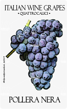 pollera nera vitigno