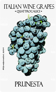 prunesta vitigno