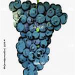 pugnitello vitigno