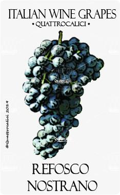 refosco nostrano vitigno