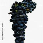 regent vitigno
