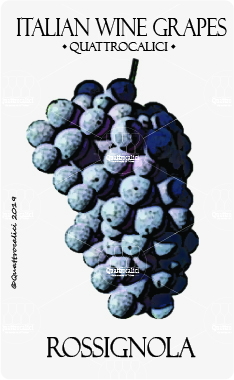 rossignola vitigno