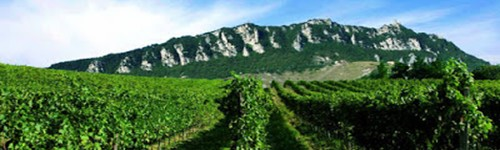 San Marino Vini