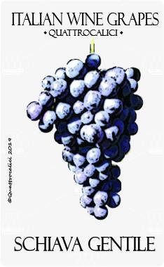 schiava gentile vitigno