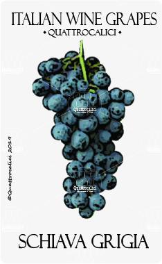 schiava grigia vitigno