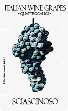 sciascinoso vitigno