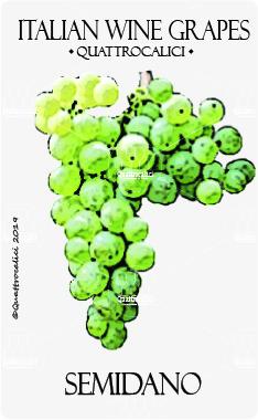 semidano vitigno