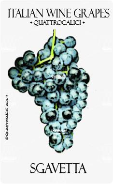 sgavetta vitigno