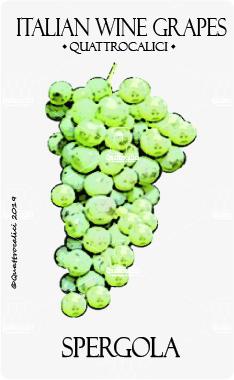 spergola vitigno