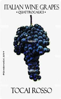 tocai rosso vitigno