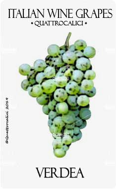 verdea vitigno