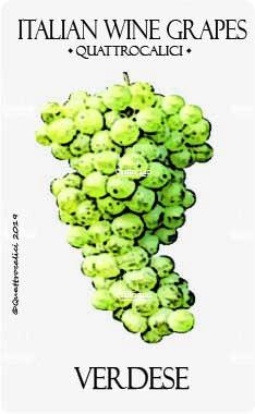 verdese vitigno