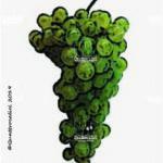 verdiso vitigno