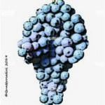 vermentino nero vitigno