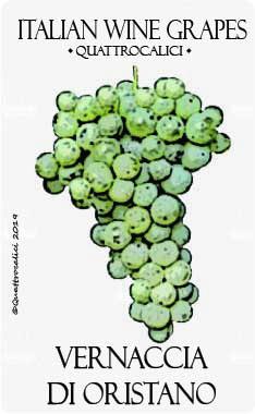 vernaccia di oristano vitigno