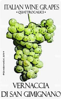 vernaccia di san gimignano vitigno