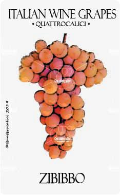 zibibbo vitigno