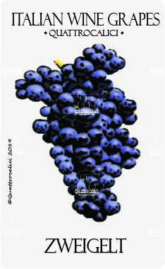 zweigelt vitigno