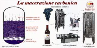 macerazione carbonica e vino novello