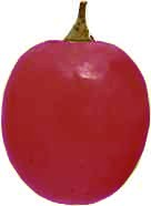 acino-rosso