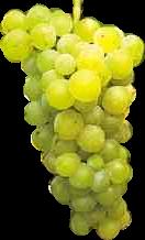 grappolo-bianco
