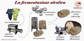 la fermentazione alcolica nel vino