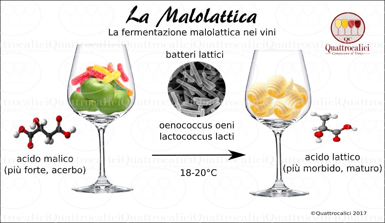 fermentazione-malolattica