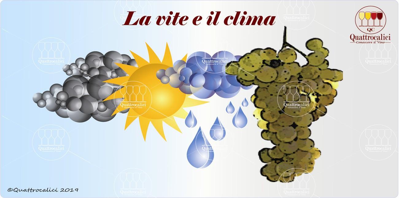 la vite e il clima