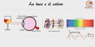 La vista e la percezione del colore nei vini