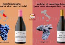 montepulciano vino e vitigno