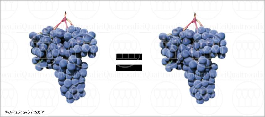 sinonimi dei vitigni