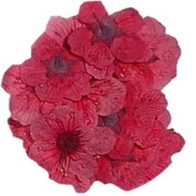 Il profumo di fiori rossi secchi nei vini