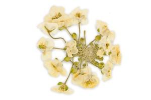 Il profumo di fiori bianchi secchi nei vini